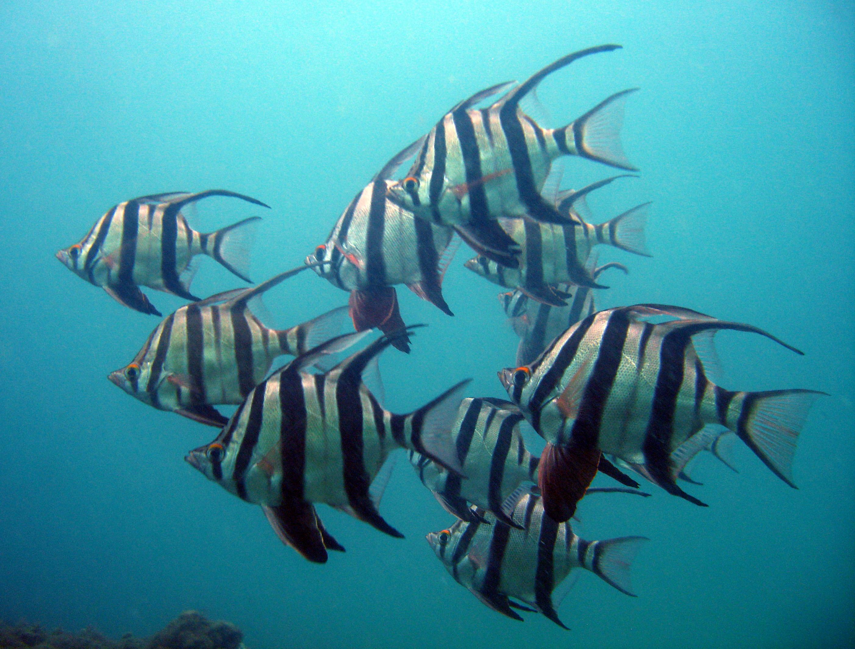 dive sites   scuba diving sydney   dive centre manly